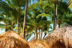 Tropical beach shelter roof and palm tree basking in hot sunshine. Royalty Free Stock Image