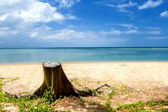 Tropical beach with soft wave on blue sea and sky, Background, P Royalty Free Stock Image