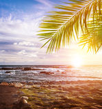 Tropical beach. South Africa, stony coastline, beautiful landscape, exotic nature, summer vacation, travel and tourism concept Royalty Free Stock Image