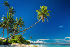 Tropical beach on south side of Samoa Island with palm trees Royalty Free Stock Images