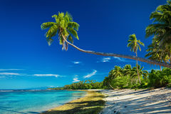 Tropical beach on south side of Samoa Island with palm trees Royalty Free Stock Photos