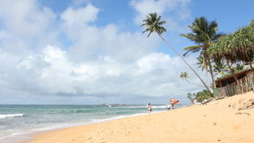 Tropical Beach,Sri Lanka. Surfers goes along the coast stock video