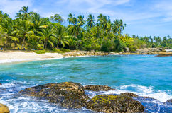 Tropical beach in Sri Lanka Royalty Free Stock Image