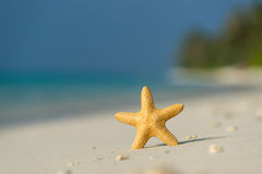 Tropical beach with a starfish on sand, sea view and sand. Royalty Free Stock Photos