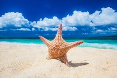 Tropical beach with starfish stock image