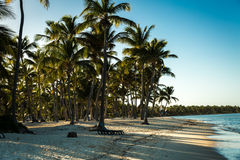 Tropical beach in a sunny day Royalty Free Stock Photos
