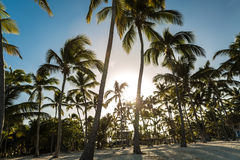 Tropical beach in a sunny day Royalty Free Stock Photography