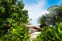 Tropical beach on the sunny day. Photo of a tropical beach on the sunny day Royalty Free Stock Image
