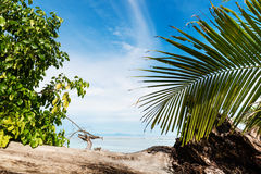 Tropical beach on the sunny day. Photo of a tropical beach on the sunny day Royalty Free Stock Photo