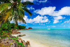 Tropical beach on the sunny day Royalty Free Stock Photos