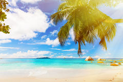 Tropical beach on the sunny day. Photo of a tropical beach on the sunny day. Toned image Royalty Free Stock Photography