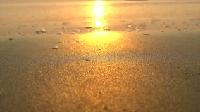 Tropical beach at sunrise. Tropical nature beach at sunrise stock footage