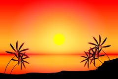 Tropical beach sunset. Beach with sea, sun and palm tree on sunset Royalty Free Stock Images