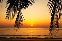 Tropical beach at sunset. Royalty Free Stock Image