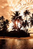 Tropical beach on sunset Royalty Free Stock Photo