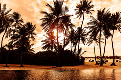 Tropical beach on sunset. Beautiful postcard with palm trees silhouette on cloudy sky background, luxury summer vacation concept Royalty Free Stock Photo