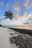 Tropical beach at sunset. Coconut palm tree on the beach at sunrise Stock Photography