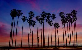 Tropical beach sunset with hight palm trees sihouette in Califor Royalty Free Stock Images