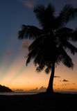 Tropical beach sunset, palm tree, horizon and sunbeams Royalty Free Stock Photography