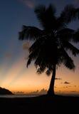 Tropical beach sunset, palm tree, horizon and sunbeams Royalty Free Stock Photography