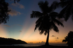 Tropical beach sunset, palm tree, horizon and sunbeams Royalty Free Stock Photos