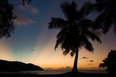 Tropical beach sunset, palm tree, horizon and sunbeams Royalty Free Stock Photos