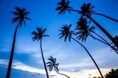 Tropical beach on sunset Royalty Free Stock Photos