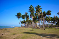 Tropical beach at Terengganu Royalty Free Stock Image