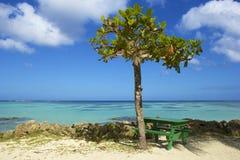 Tropical beach in Tobago, Caribbean Royalty Free Stock Image
