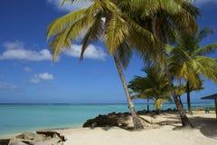 Tropical beach in Tobago, Caribbean Stock Image