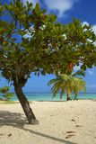 Tropical beach in Tobago, Caribbean Royalty Free Stock Images
