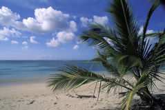 Tropical beach in Tobago. The beach facing Buccoo Coral Reef, Tobago, West Indies Stock Image