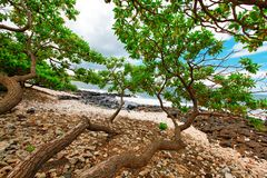 Tropical beach with tree brenches over rocks. Maui. Hawaii. Stock Photography