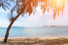 Tropical beach with tree and sunlight. Holiday and Relax concept.  Stock Image