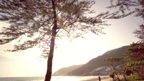 Tropical beach with trees and mountain in sunny day.  stock video footage