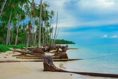 Tropical beach after Tsunami Stock Image