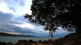 Tropical beach under gloomy sky with alone tree. stock footage
