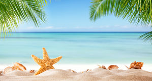 Tropical beach with various shells in sand. Copyspace for text. Concept of summr relaxation Royalty Free Stock Image