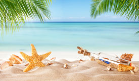 Tropical beach with various shells in sand Royalty Free Stock Images