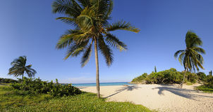 Tropical beach with vegetation panorama. Panoramic landscape of tropical cuban beach with vegetation Stock Image