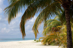 Tropical beach. View from the beach of the island of the Indian Ocean Stock Image
