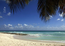 Tropical beach. View of nice tropical beach with palm. Barbados Royalty Free Stock Photos