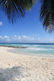 Tropical beach. View of nice tropical beach with palm. Barbados Royalty Free Stock Photography