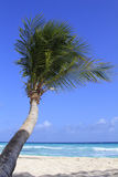 Tropical beach. View of nice tropical beach with palm. Barbados Royalty Free Stock Images