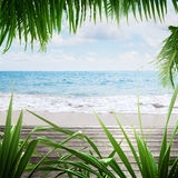 On tropical beach. View of nice tropical beach with some palms stock images