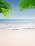 Tropical beach. View of nice tropical beach with some palms stock photos
