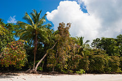 Tropical Beach. View over a beautiful caribbean beach in Costa Rica royalty free stock images