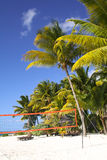 Tropical beach with volleyball net under palm trees Royalty Free Stock Images
