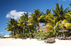 Tropical beach with white sand, palm trees and sun umbrellas Stock Images
