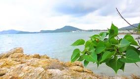 Tropical beach white sand shore in Thailand. Tropical beach white sand shore in Thailand stock video
